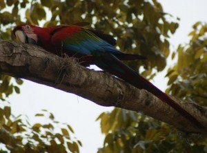 xRGMacaw2_jpg_pagespeed_ic_E5XX_sRKHP